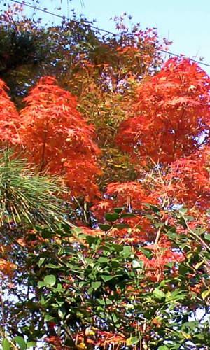 東福寺の近辺で